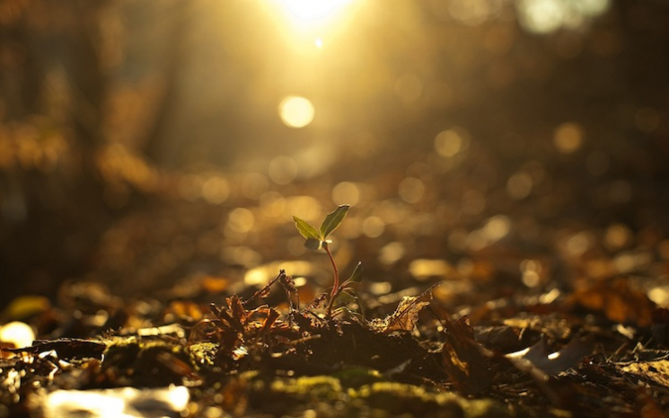 sunlit-sprout-nature-hd-wallpaper-1920x1200-4661